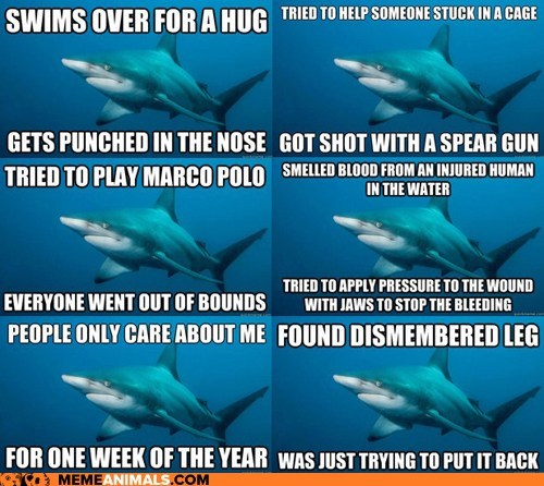Hall of Fame introducing meme Misunderstood Shark new shark
