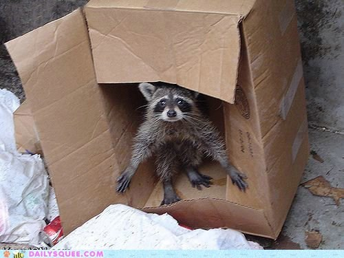 box,cardboard,hobo,home,house,raccoon