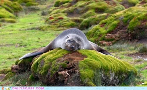 nap rock seal serious sleep snooze - 5971846400