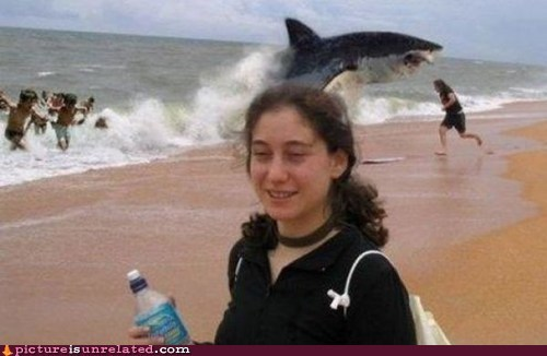 beach,shark attack,shopped pixels,wtf