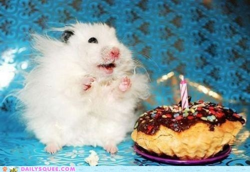 birthday cake cakes candle Hall of Fame hamster hamsters happy squee yay - 5972145920