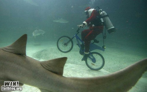 biker scuba shark underwater what - 5972349184