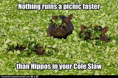 camouflage,cole slaw,danger,food,hide,hippo,scary