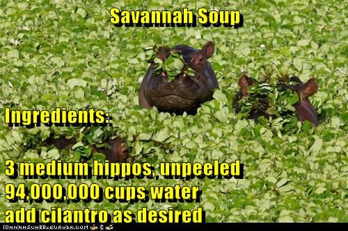 Savannah Soup Ingredients: 3 medium hippos, unpeeled 94,000,000 cups water