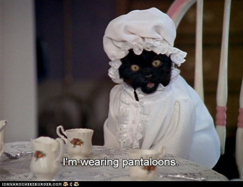 bonnet cat costume dressed up fyi lolwut pantaloons sabrina the teenage witch salem wearing