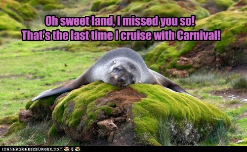 boat,cruise,hug,land,ocean,relief,sea lion,seal,sick,water