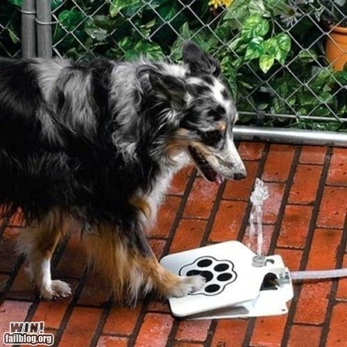 clever design dogs hose invention pets water - 5972971008