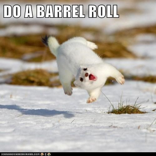 do a barrel roll ermine ferret flip fly snow weasel winter - 5973072128