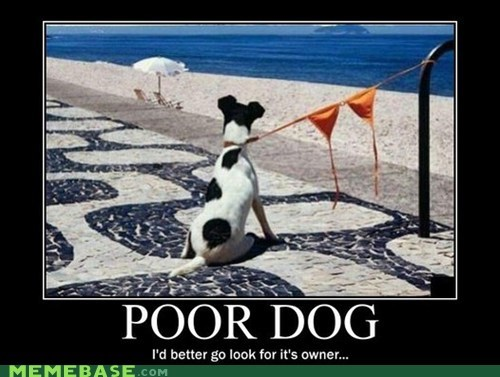 bewbs bikini hilarious owner poor dog wtf - 5973352448