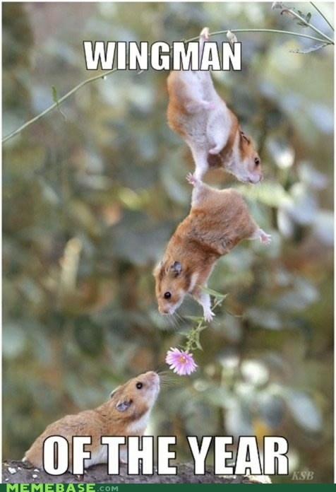 award Flower friends hamsters Memes wingman - 5973375232
