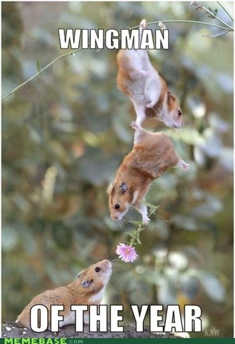award Flower friends hamsters Memes wingman - 5973375232