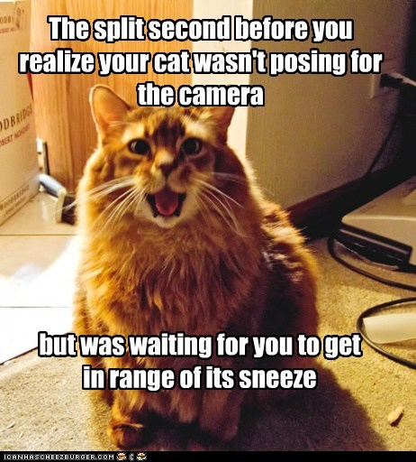 camera,cat,gross,not,posing,range,realization,sneeze,sneezing,tabby,waiting