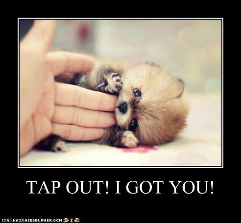 cyoot cyoot puppy ob teh day demotivational funny puppy what breed - 5973478656