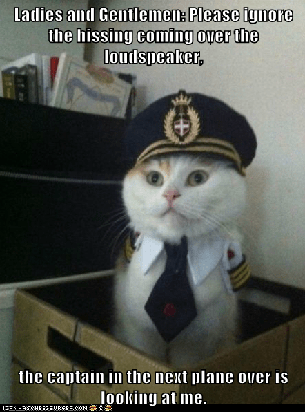 airplanes Captain Kitteh captains Cats flying Hall of Fame Memes pilots - 5973581824