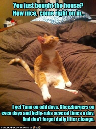 Cheezburger Image 5973816064