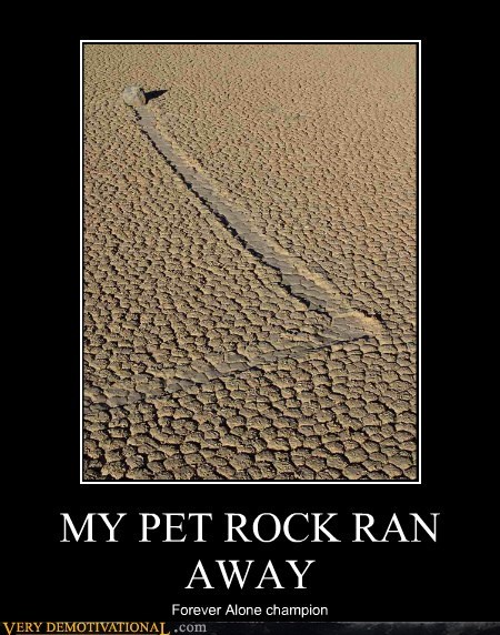 Champion forever alone hilarious pet rock ran away - 5974078464