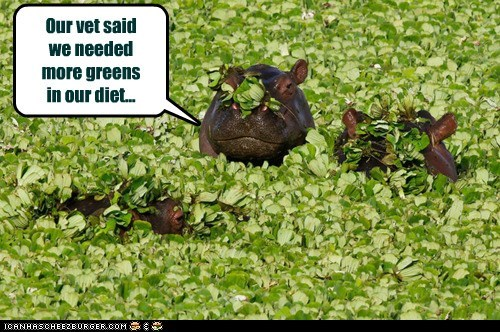 Our vet said we needed more greens in our diet...
