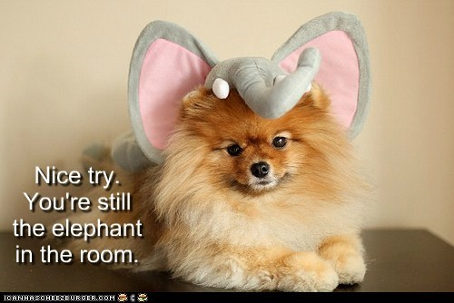 Nice try. You're still the elephant in the room.