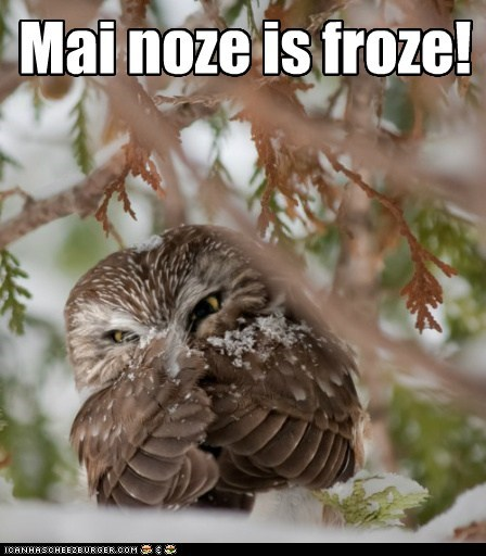 beak cold frozen glare nose Owl snow winter - 5975186944