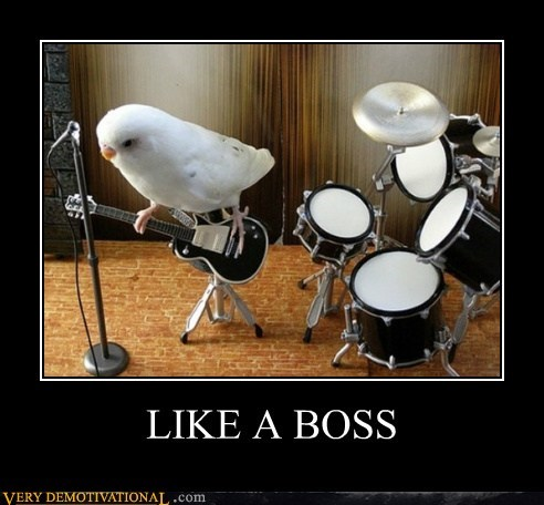 awesome,bird,guitar,hilarious,Like a Boss