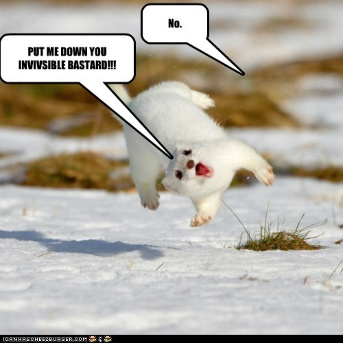 bully ermine ferret fly invisible lift snow weasel