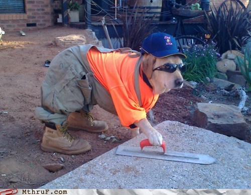 construction,construction worker,dogs,g rated,Hall of Fame,Monday Thru Failblog,pavement,paving