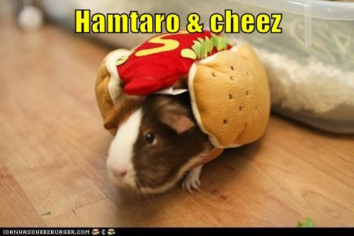 costume,disguise,food,guinea pig,hotdog,nom