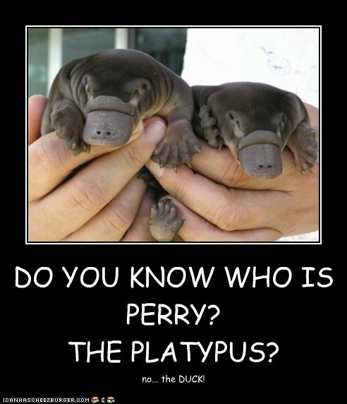DO YOU KNOW WHO IS PERRY? THE PLATYPUS? no... the DUCK!