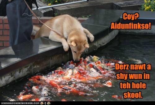 fish - 5976480256