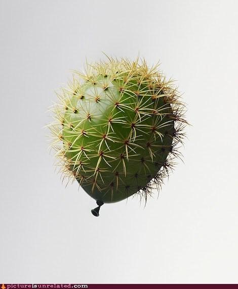 balloon cactus wtf - 5976696832