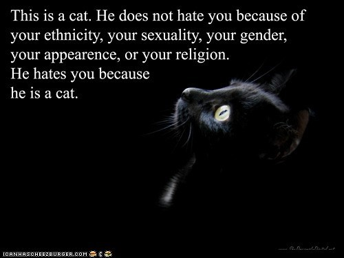 Kittehs Are Equal Opportunity Haters