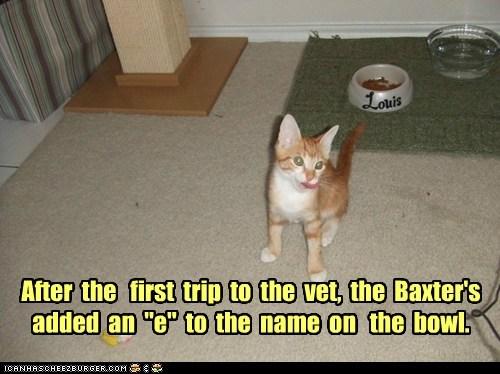 boy confused first gender girl kitten mistake name oops tabby trip vet - 5976809472
