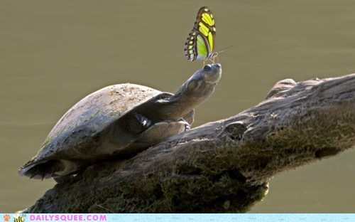 butterfly friends head Interspecies Love rest turtle