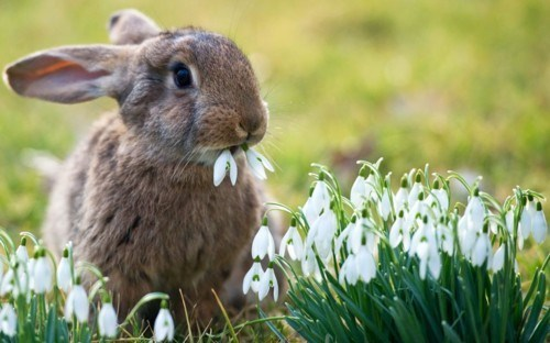 eat,Flower,happy bunday,snack