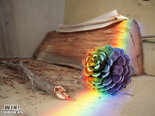photography pine cone pretty colors rainbow - 5977283840