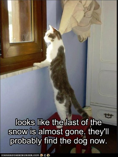 looks like the last of the snow is almost gone. they'll probably find the dog now.