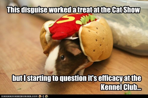 camouflage disguise dogs dog show food guinea pig hide hotdog i has a hotdog