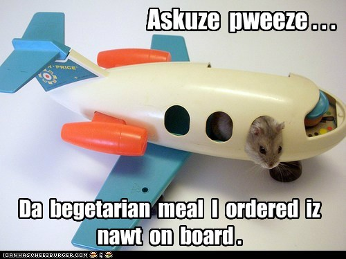 complain flight hamster plane question vegetable vegetarian - 5977722112