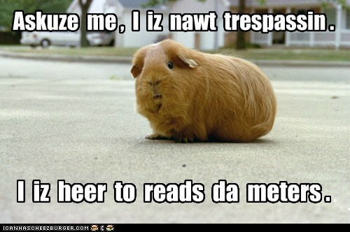 car,guinea pig,meter,paid,Trespass,work