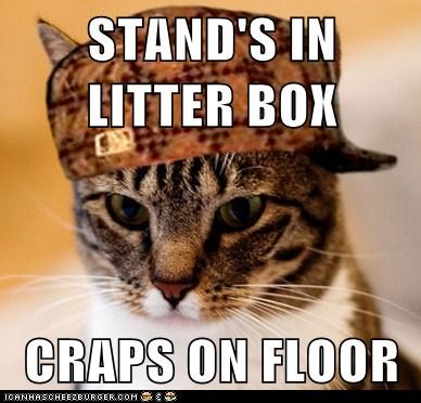 STAND'S IN LITTER BOX CRAPS ON FLOOR