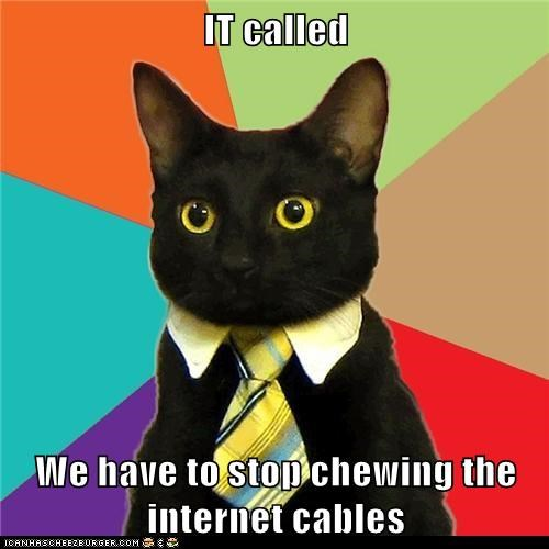 Business Cat cables Cats chewing it Memes offices work - 5978566912