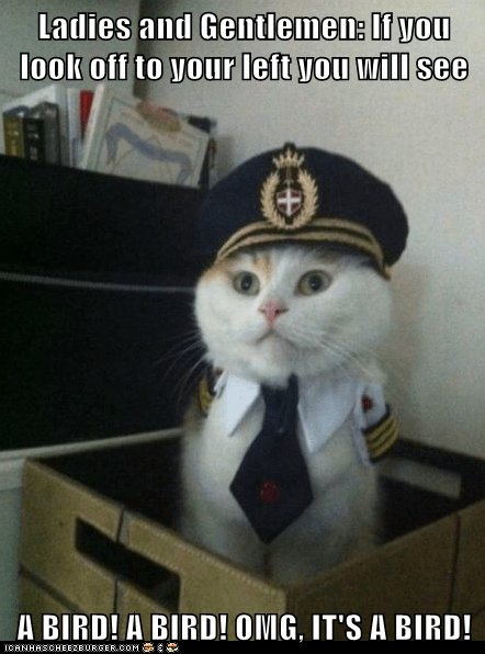 birds Captain Kitteh Cats flying Hall of Fame Memes pilots planes - 5979067136