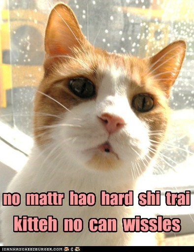 no mattr hao hard shi trai kitteh no can wissles