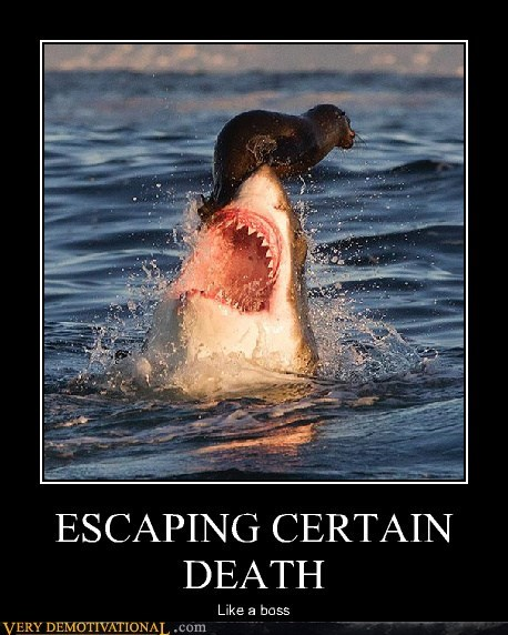Death escaping seal shark Terrifying wtf