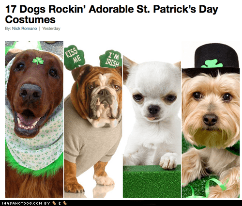 costume cute dogs funny holiday St Patrick's Day - 5980549632
