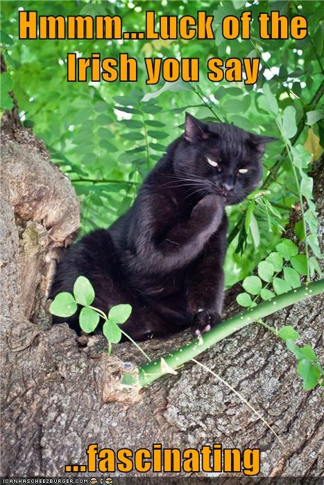clover interested interesting irish luck St Patrick's Day - 5980600576