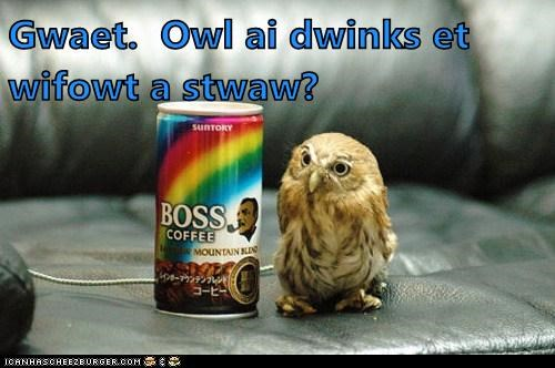 beak,bird,boss,coffee,drink,liquid,Owl,straw