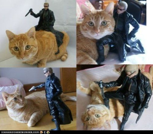 action figure,albert wesker,best of the week,cat,Hall of Fame,posing,prequel,resident evil,tabby,wesker