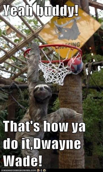 basketball extreme game hang net play sloth sports