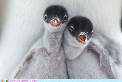 chicks,penguins,Photo,smile